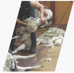 people_employment_shearing_image